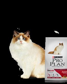 alimento gato ad
