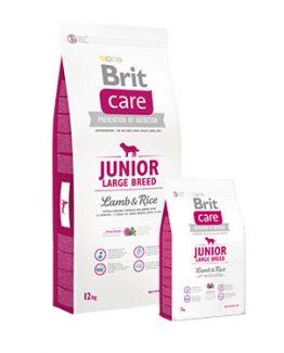 junior_large_breed_lamb